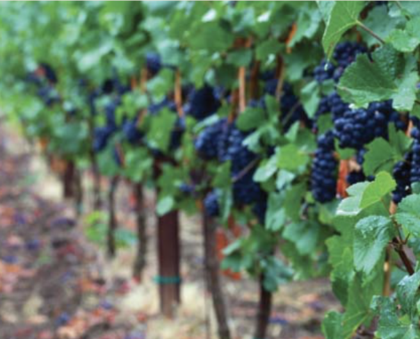 Wines of the Pacific Northwest tour with LSU Alumni